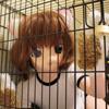 三毛猫娘を檻監禁 -窒息責め-